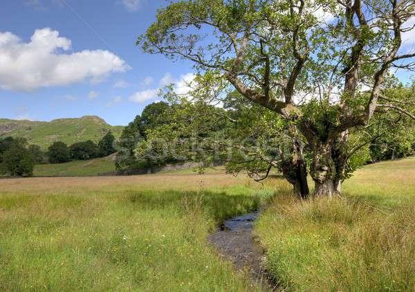 Alder tree and stream Stock photo © andrewroland