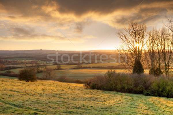 Golden winters morning, England Stock photo © andrewroland
