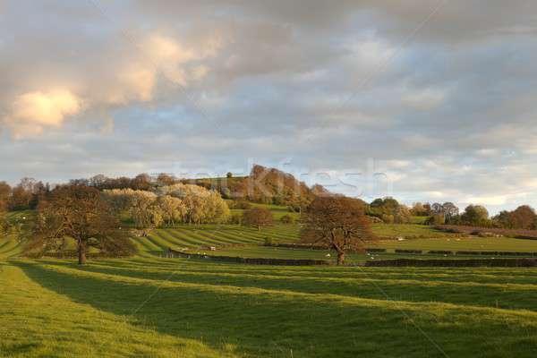 Warwickshire countryside Stock photo © andrewroland