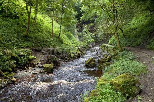 Yorkshire river Stock photo © andrewroland