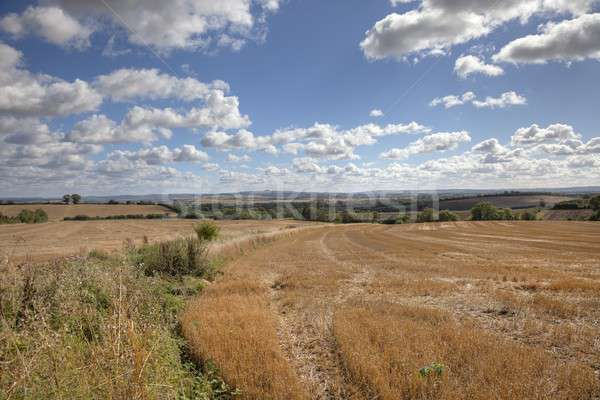 Harvested wheat fields Stock photo © andrewroland