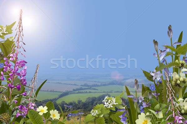 Yaz kır çiçekleri kır çiçeği güneş doğa güzellik Stok fotoğraf © andrewroland