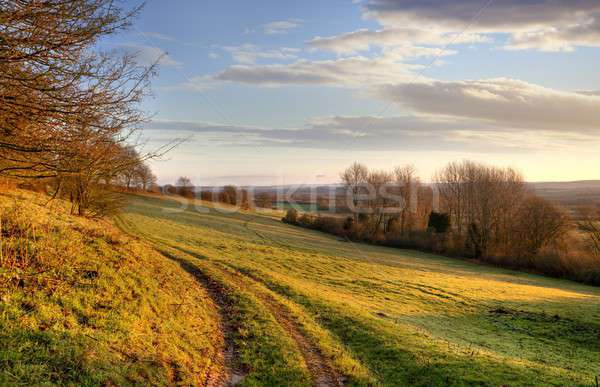 Morning landscape, England Stock photo © andrewroland