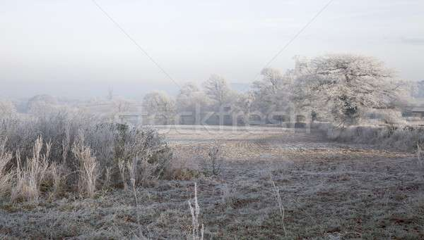 Hoar frost, England Stock photo © andrewroland
