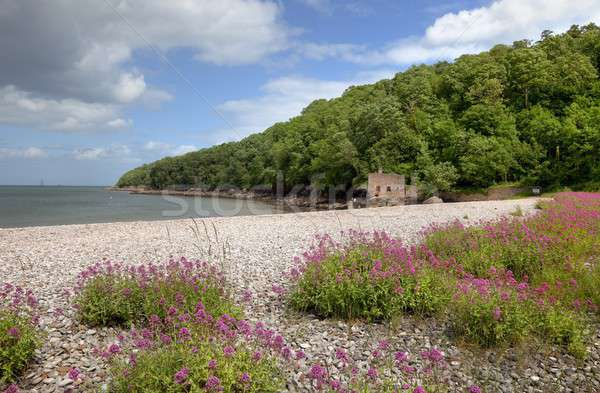 Elberry Cove, Devon Stock photo © andrewroland