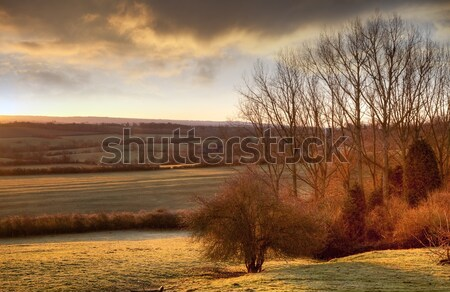 Sun rising over Gloucestershire Stock photo © andrewroland