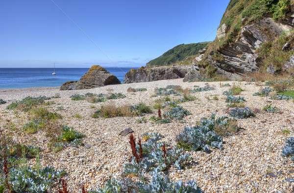 Сток-фото: морем · Корнуолл · Англии · растущий