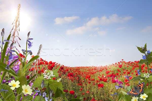 лет весны природы красоту Сток-фото © andrewroland
