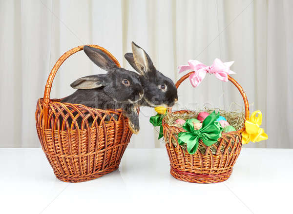 Near Easter basket two rabbits sitting in a basket Stock photo © Andreyfire