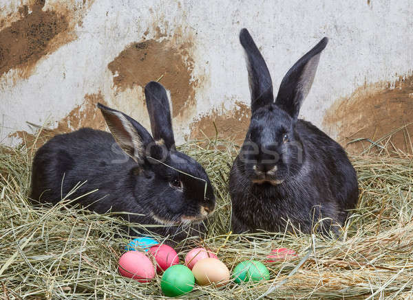 Little rabbits lie on hay near Easter eggs Stock photo © Andreyfire