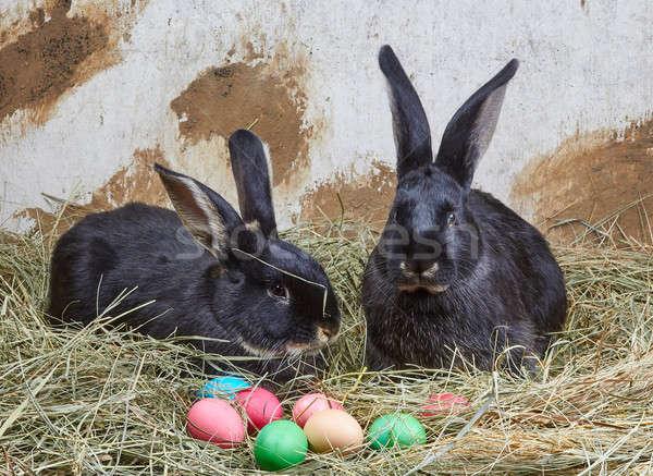 Сток-фото: мало · Кролики · лежать · сено · пасхальных · яиц · счастливым