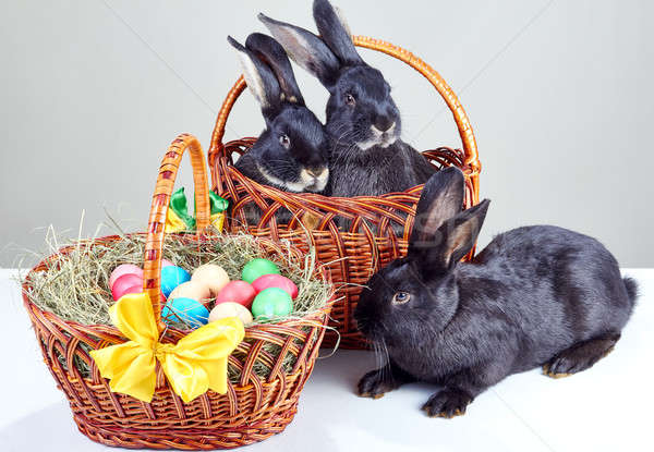 Two rabbits sitting in a basket, and one next to the basket near the Easter basket Stock photo © Andreyfire