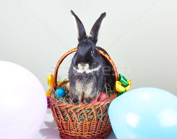 On Easter basket decoration the balloons is sitting rabbit Stock photo © Andreyfire