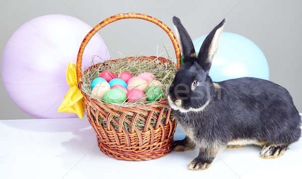 Beautiful bunny near Easter basket decorated with balloons Stock photo © Andreyfire