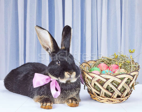 Stockfoto: Boeg · nek · konijn · mand · Pasen · gelukkig