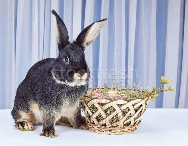 Blanche lapin séance belle panier œufs de Pâques Photo stock © Andreyfire