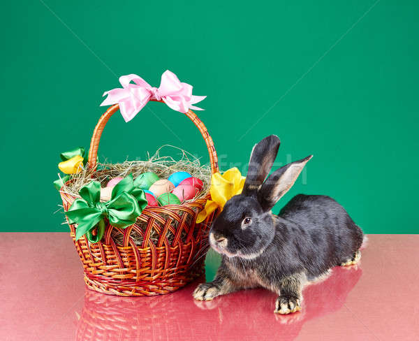 Near Easter basket is lying bunny Stock photo © Andreyfire