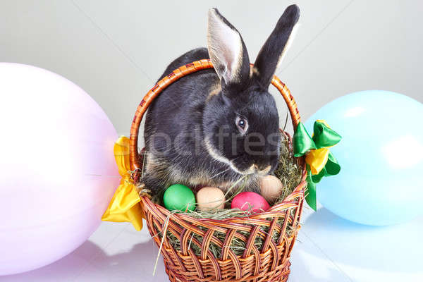 Black rabbit sitting on Easter basket decoration balloons Stock photo © Andreyfire