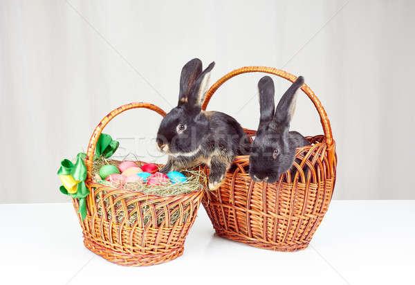 Pâques panier lapins heureux noir marketing Photo stock © Andreyfire