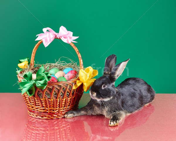 Weinig konijn Pasen mand groene Stockfoto © Andreyfire