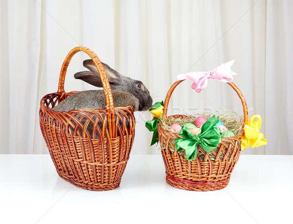 Grijs bunny mand Pasen gelukkig konijn Stockfoto © Andreyfire
