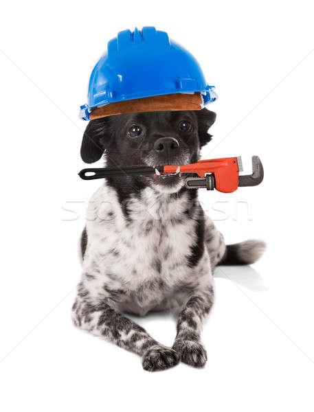 Dog Wearing Hard Hat Stock photo © AndreyPopov