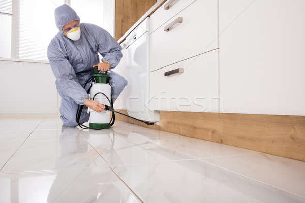 Exterminator Spraying Pesticide In Kitchen Stock photo © AndreyPopov