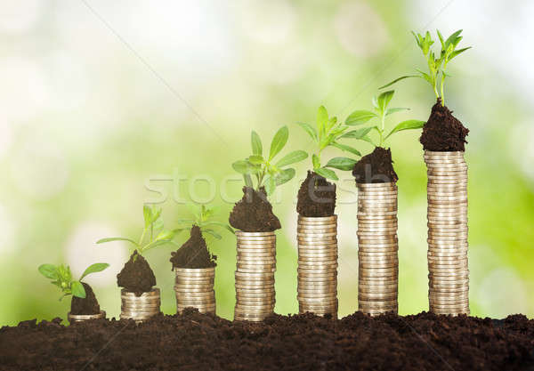 Small Plant Growing On Stacked Coins Stock photo © AndreyPopov