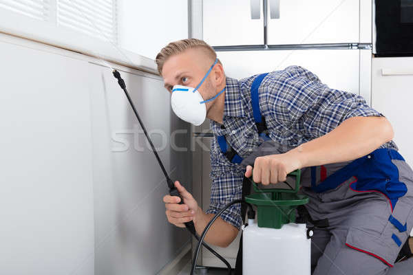 Worker Spraying Pesticide On Wall Stock photo © AndreyPopov