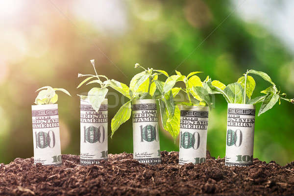 Saplings Covered With American Banknotes Stock photo © AndreyPopov