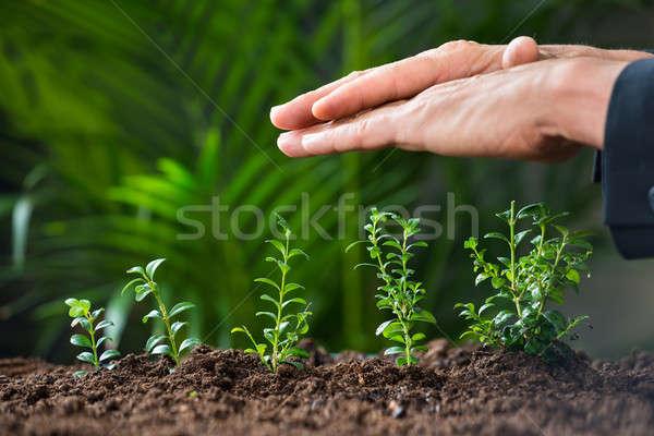Mani impianti crescita terra primo piano verde Foto d'archivio © AndreyPopov