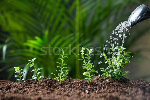 Víz növények locsolókanna közelkép kert kosz Stock fotó © AndreyPopov