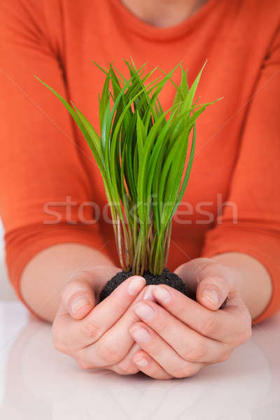 Woman Holding Saplings At Desk Stock photo © AndreyPopov