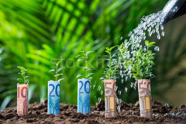 Water Being Poured On Plants Wrapped With Euro Bills Stock photo © AndreyPopov
