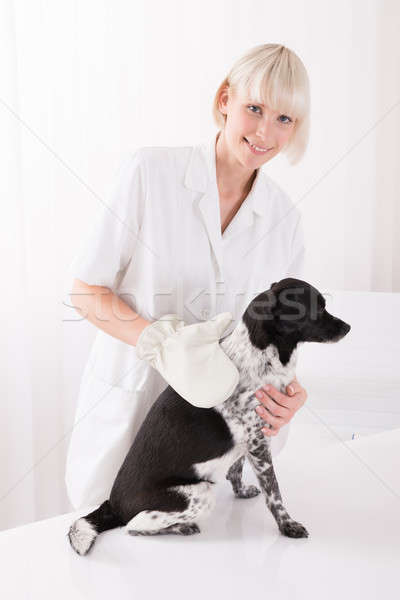 Female Veterinary Examining Dog Stock photo © AndreyPopov