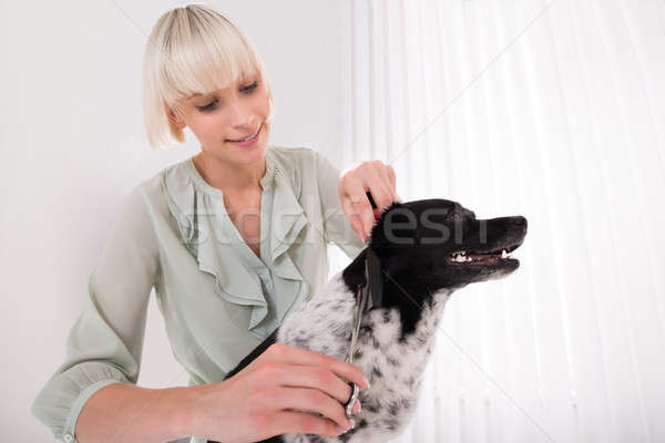 Woman Grooming Her Dog Stock photo © AndreyPopov