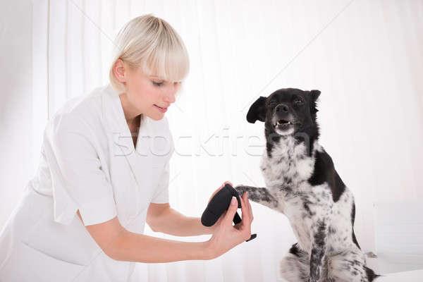Női állatorvos bandázs kutyák mancs fiatal Stock fotó © AndreyPopov
