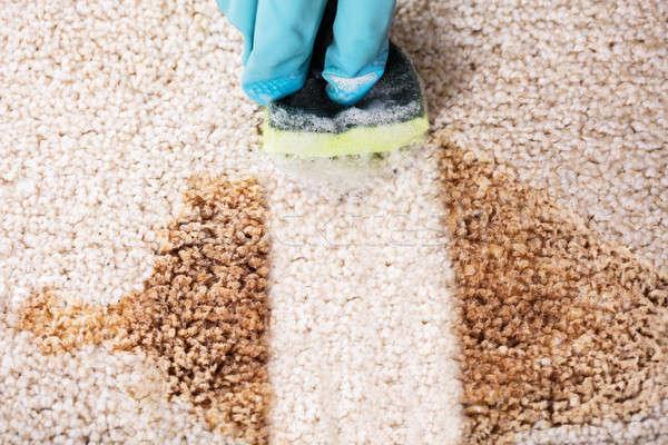Stockfoto: Persoon · handschoenen · schoonmaken · vlek · tapijt