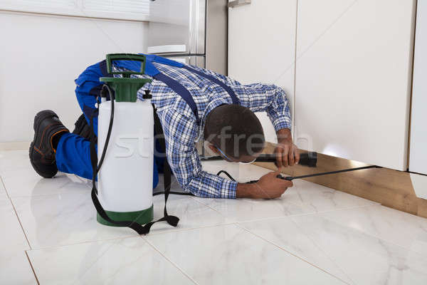 Worker Kneeling On Floor And Spraying Pesticide Stock photo © AndreyPopov