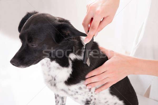 Vet Combing Dog's Hair Stock photo © AndreyPopov