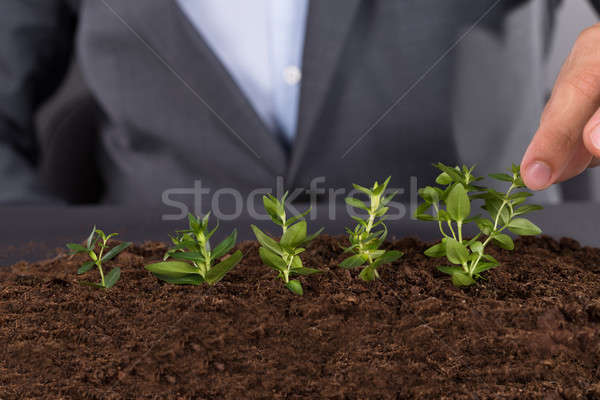 Businessman growing green saplings Stock photo © AndreyPopov