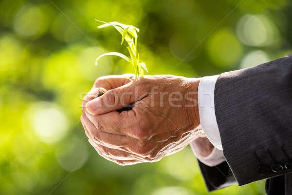 Empresário planta solo mão Foto stock © AndreyPopov