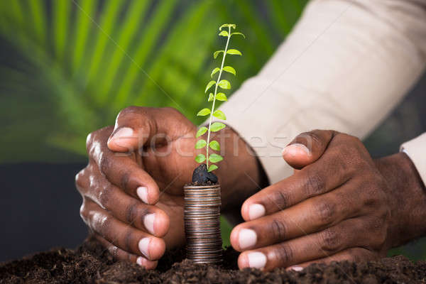 Close-up Of Person's Hand Protecting Sapling Stock photo © AndreyPopov