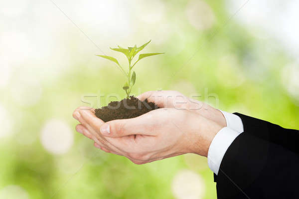 Businessperson Holding Plant Stock photo © AndreyPopov