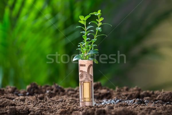 Roślin euro Uwaga gruntów ceny Zdjęcia stock © AndreyPopov