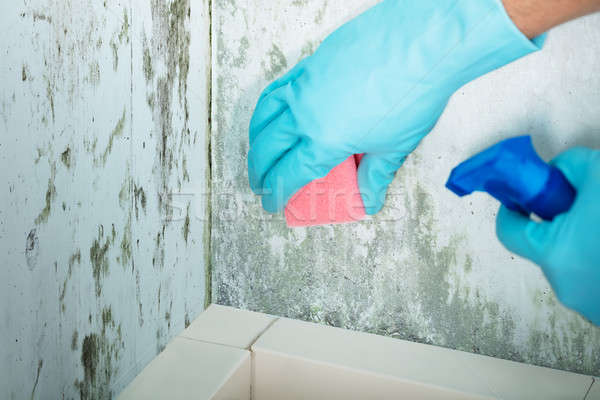 Person Hand Cleaning Moldy Wall Stock photo © AndreyPopov