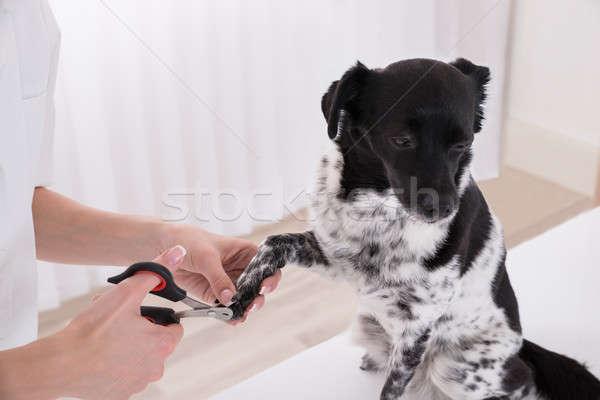 Közelkép állatorvos vág kutyák lábköröm szög Stock fotó © AndreyPopov