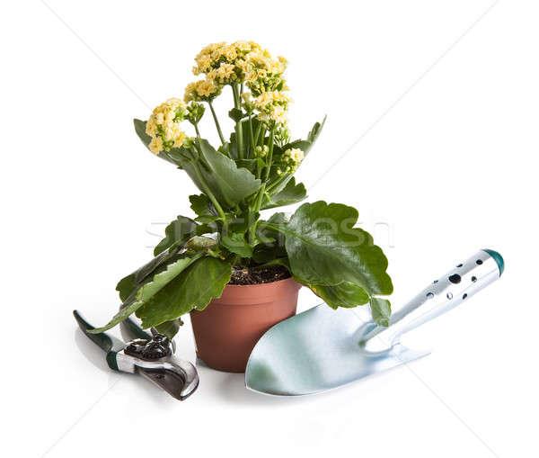 Közelkép cserepes növény kerti eszközök fehér virág természet Stock fotó © AndreyPopov