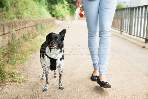 Woman Walking With Her Dog Stock photo © AndreyPopov