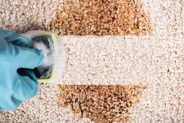 Person Wearing Gloves Cleaning Stain Of Carpet Stock photo © AndreyPopov